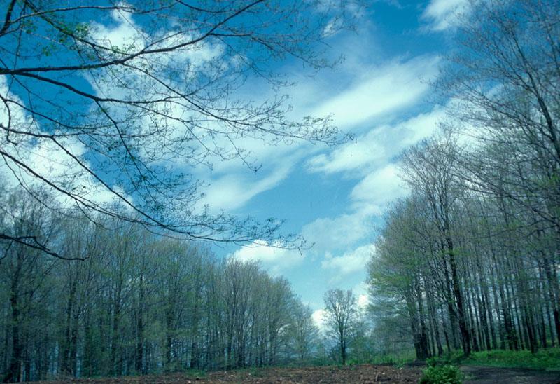 Livrée des forêts
