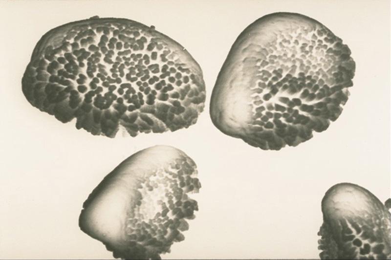 Rouille - tumeur de l'écorce