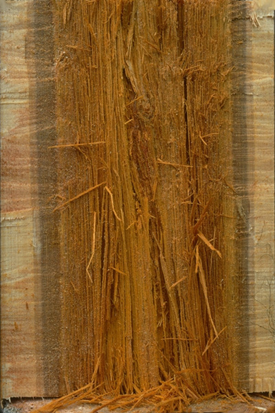 Carie brune filandreuse
